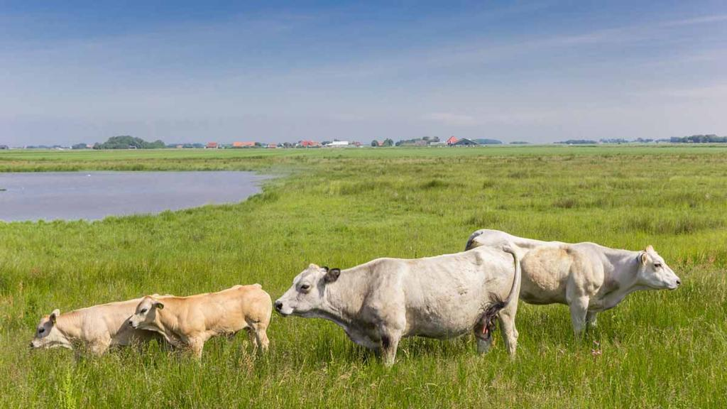 Livestock numbers must be cut to meet climate targets, Dutch Government told