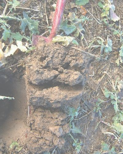 An example of a poor soil