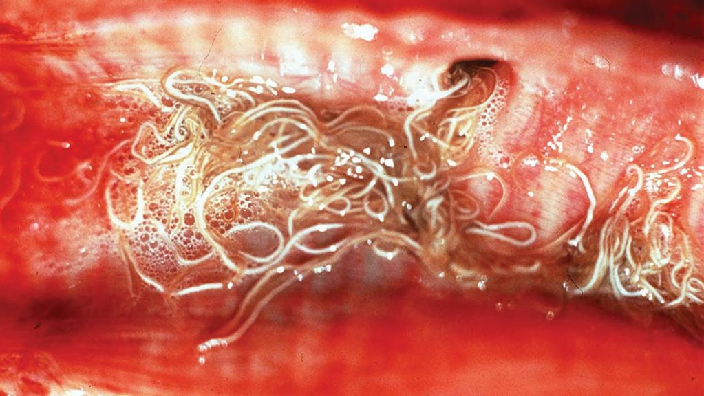 Lungworm warning for UK farmers in wake of weather pattern