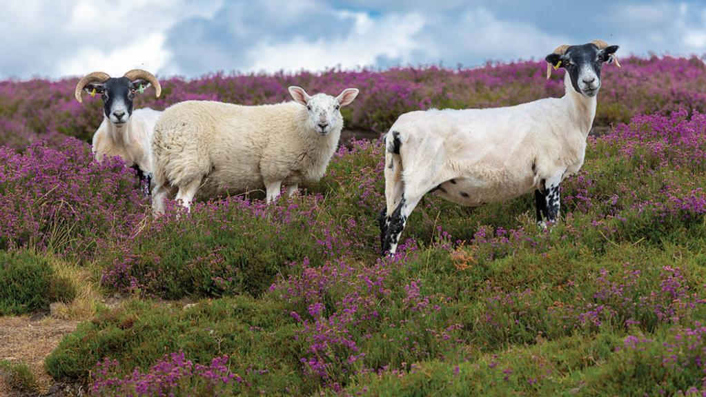 Sheep and deer form integral part of farm's future-proofing