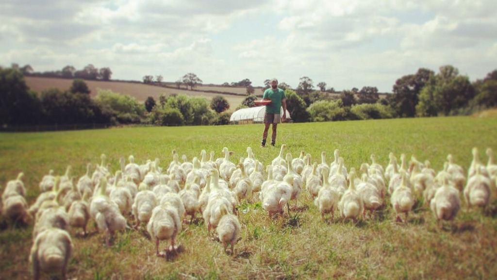 Follow a farmer: Graduate making a success of brand new goose business