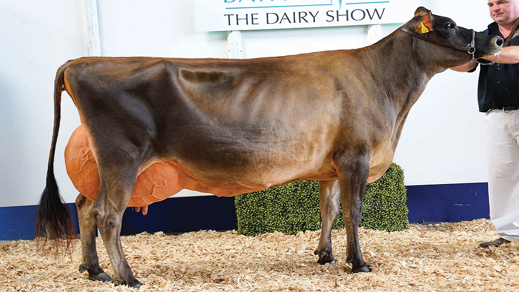 Wilson family dominate top honours at the Dairy Show