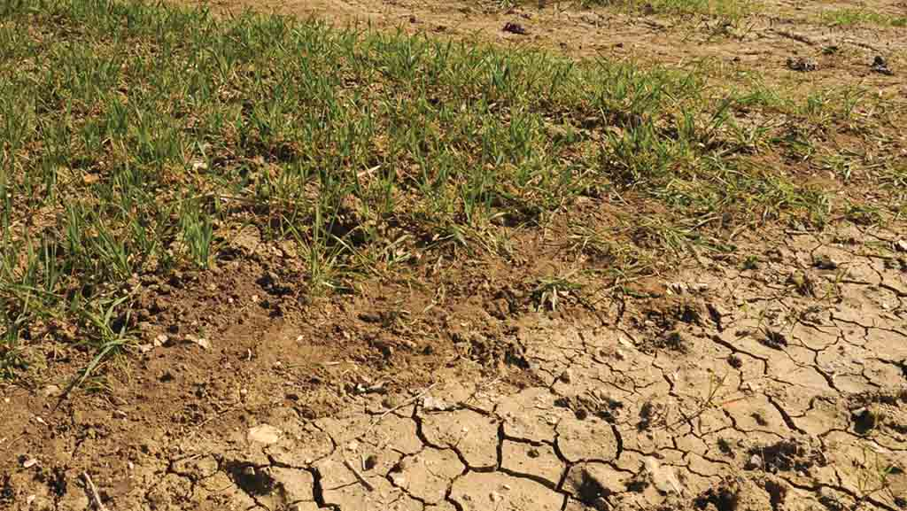 Funding secured to combat drought tolerance