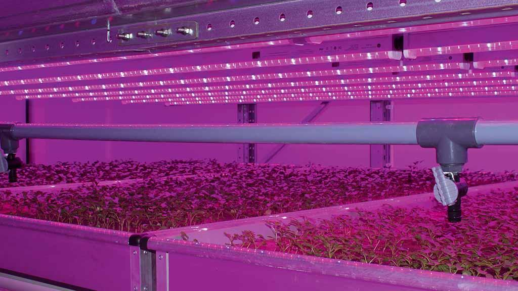 Opening the doors to new crops technology