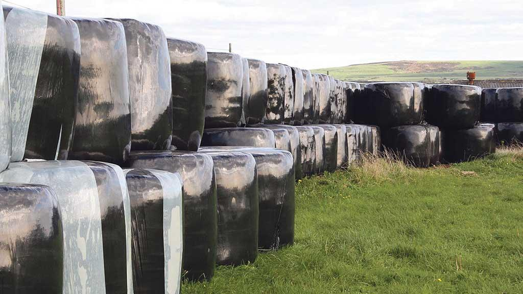 Focus on 'winter survival' as farmers cull livestock to manage forage supplies