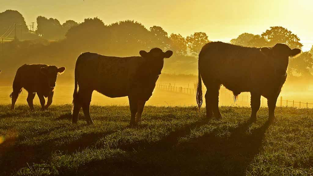 Farmer 'heartbroken' but BSE case unlikely to impact trade