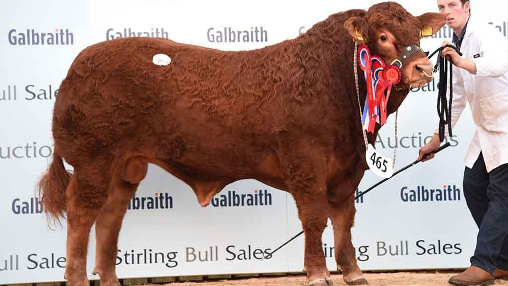 STIRLING BULL SALES: Limousins sell to 11,000gns high twice