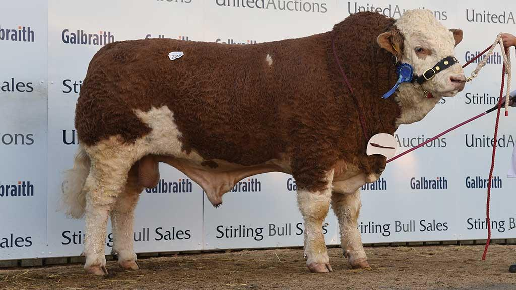 Islavale Irish 17 from the Stronach family, Keith, which sold for 16,000gns