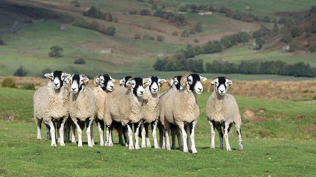 UK farmers urged to look to profit and 'Brexit-proof' their businesses