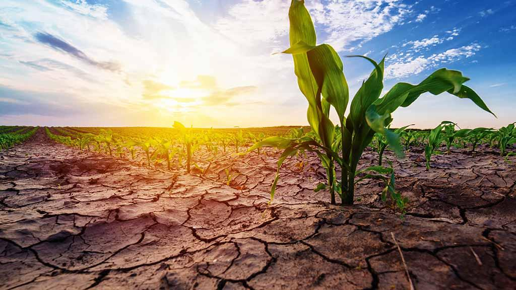 Impact of 2018 droughts affecting farmers across the globe
