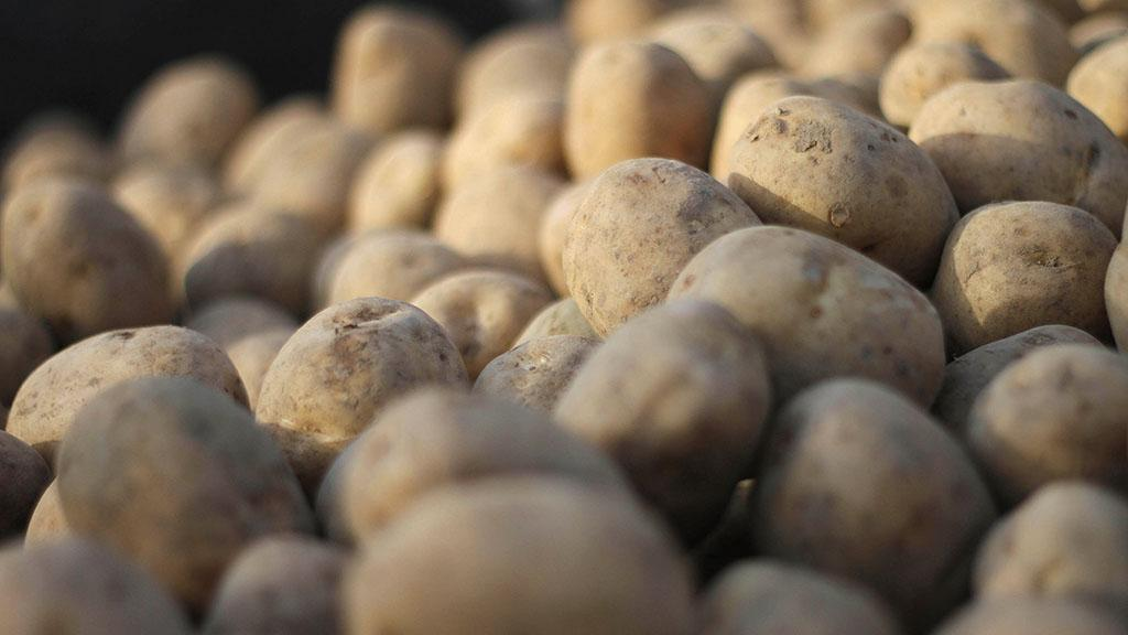 Potatoes and other veg at risk due to climate change