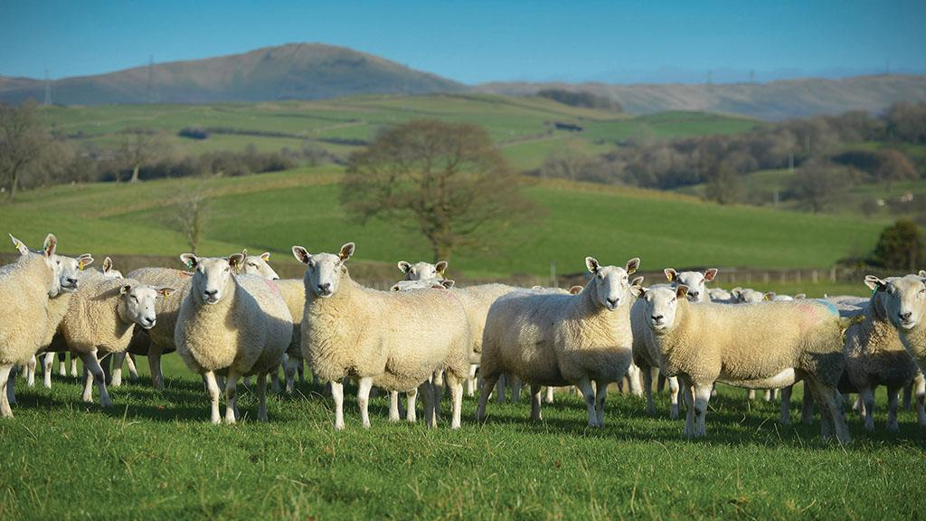Travel bursaries worth £2,750 launched for young sheep farmers