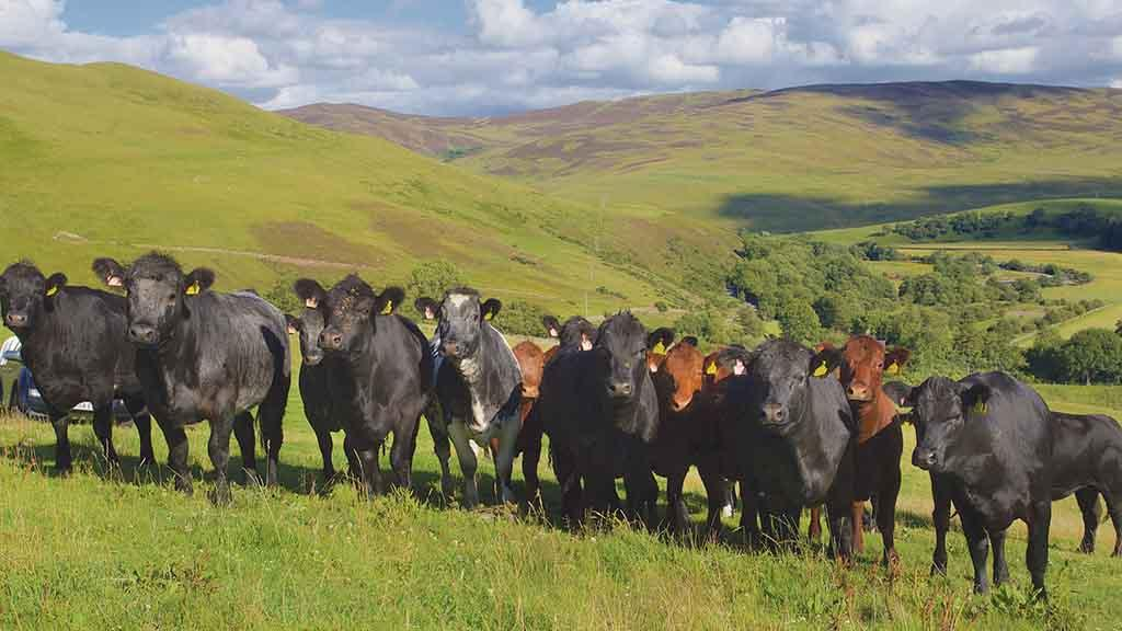 Upland farming: Land abandonment could become a reality if support is cut