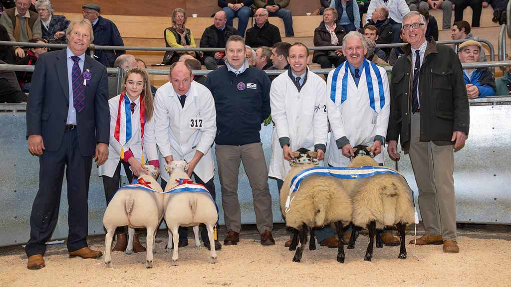 Overall sheep, Beltex from R. Hall and Son and reserve, Blackface from J. and T. Macpherson.