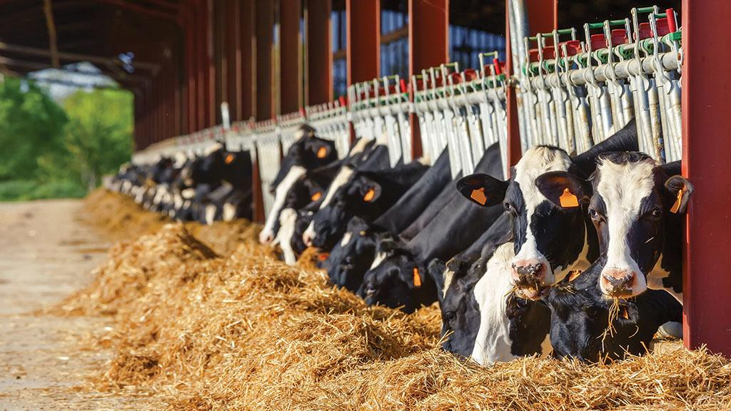 Dairy special: Top tips on reducing feed waste to increase margins
