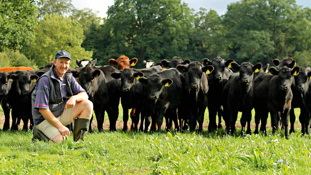 Targeted sexed semen boosts dairy herd efficiency