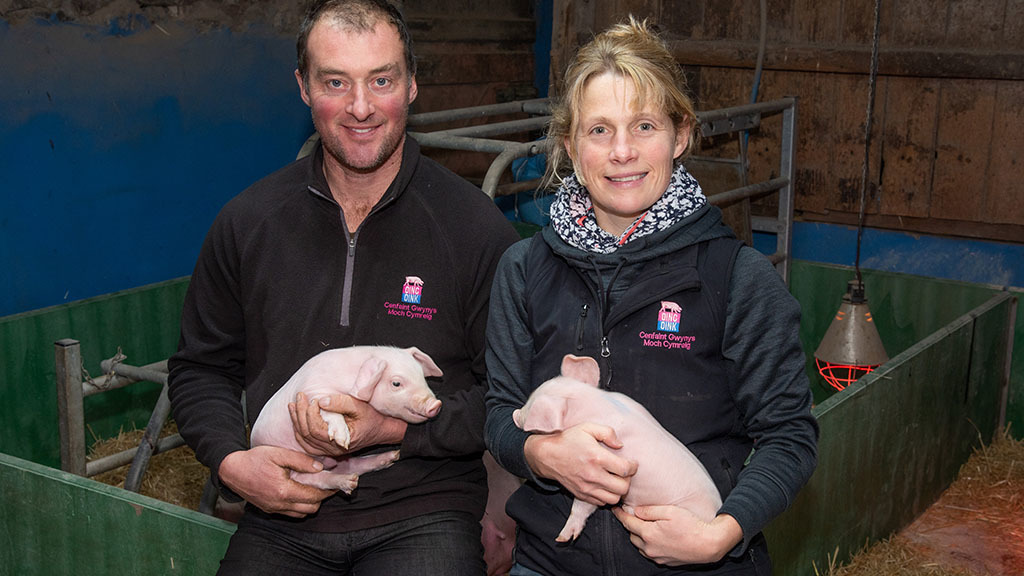 Farm profile: Rare Welsh pigs key to traditional farm