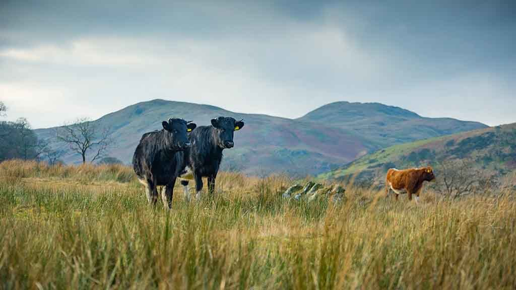 'Hill farmers need 'bespoke' funding scheme to survive after Brexit'