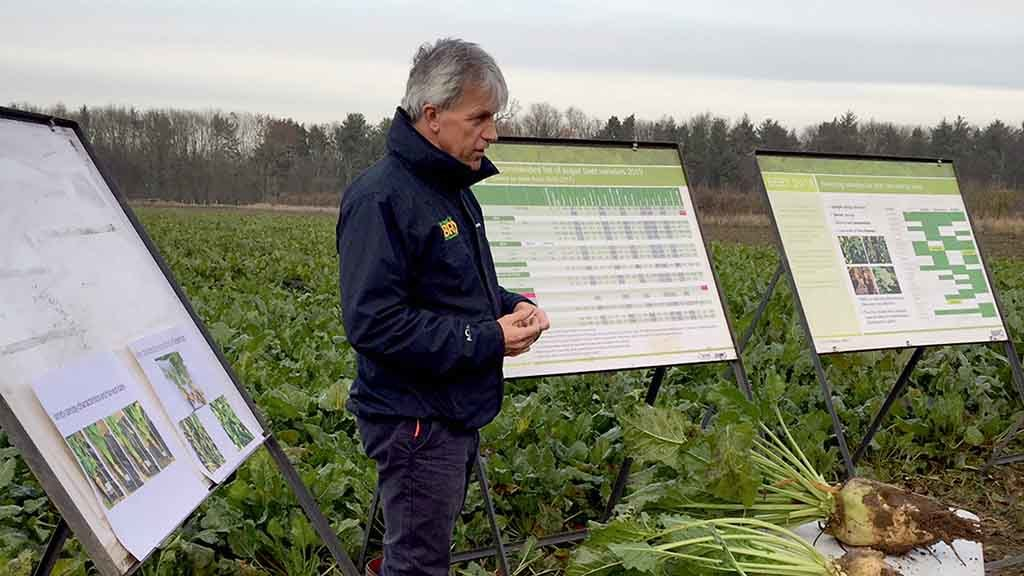 Selecting suitable late harvest beet varieties