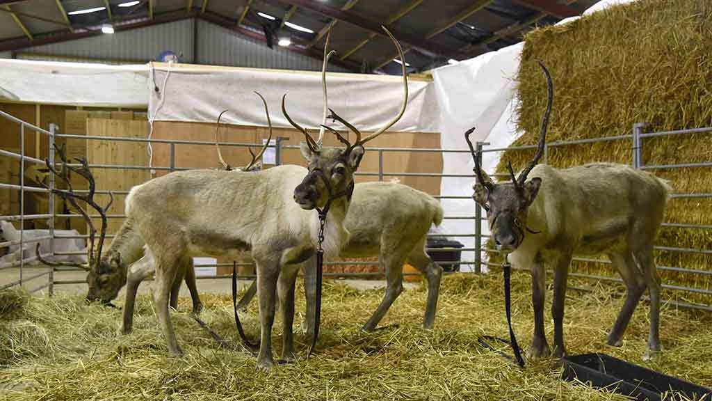 Farm profile: Reindeer diversification gives education farm a boost