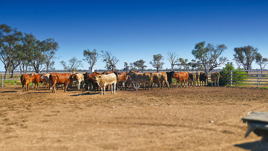 Global ag view: What the UK can learn from Australian farms