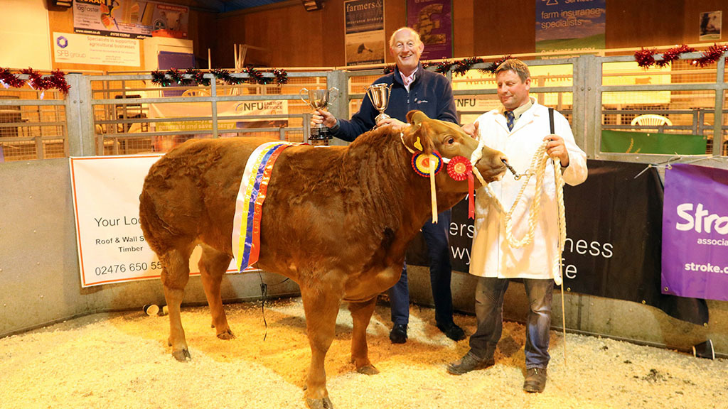 Rugby cattle champion