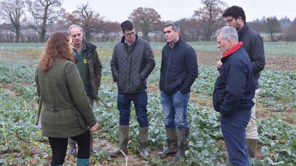 Dry soils and cabbage stem flea beetle damage top of mind for iOSR growers