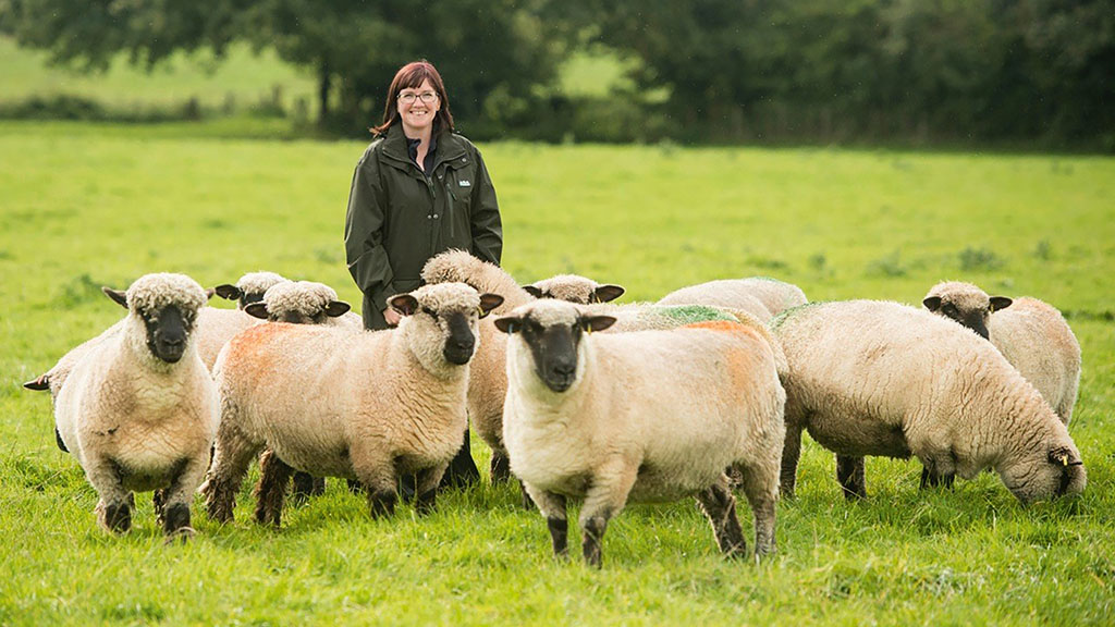 What performance recording means to UK pedigree sheep breeders