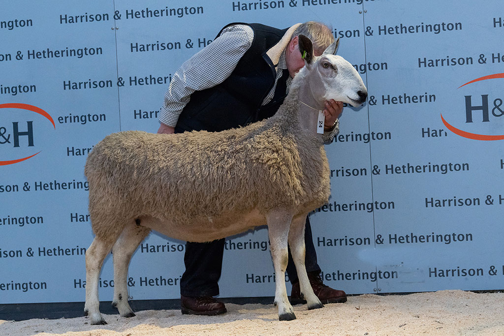 Top price, a 2016-born ewe which sold for 4,800gns to Mike Anderson, Ballinadalloch.