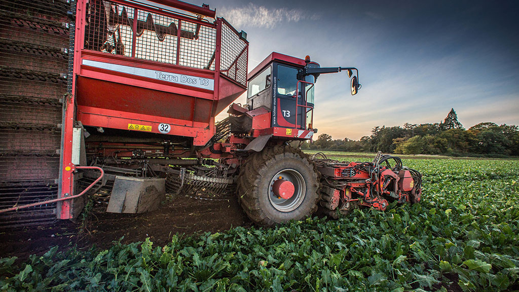 Dry weather causing varied beet lifting conditions