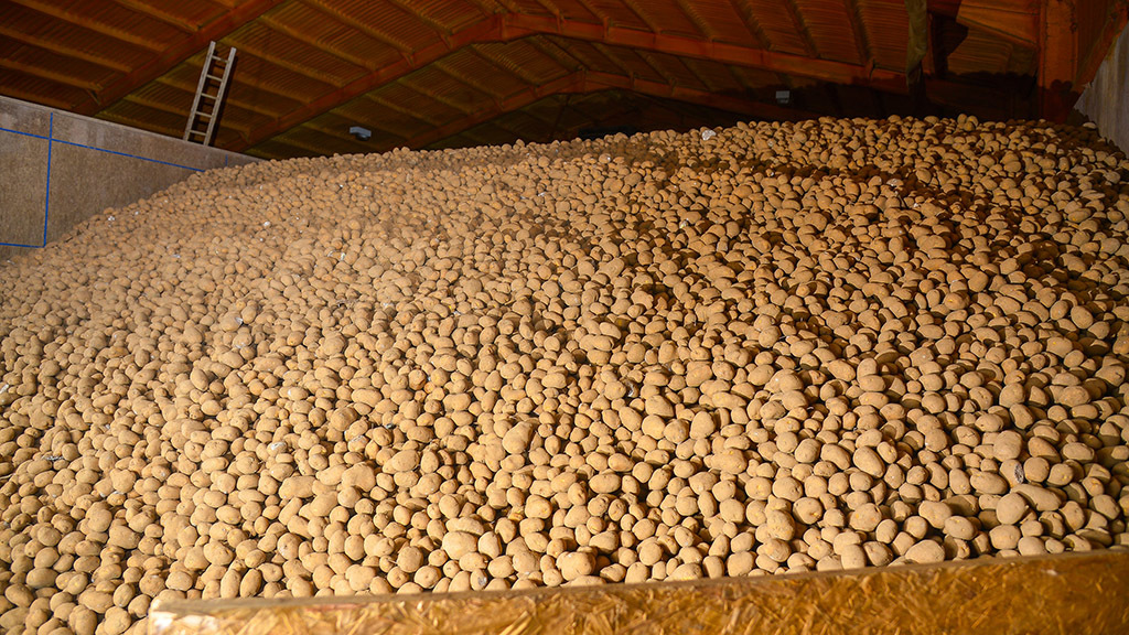 Potato stocks at lowest level in the season since 2012