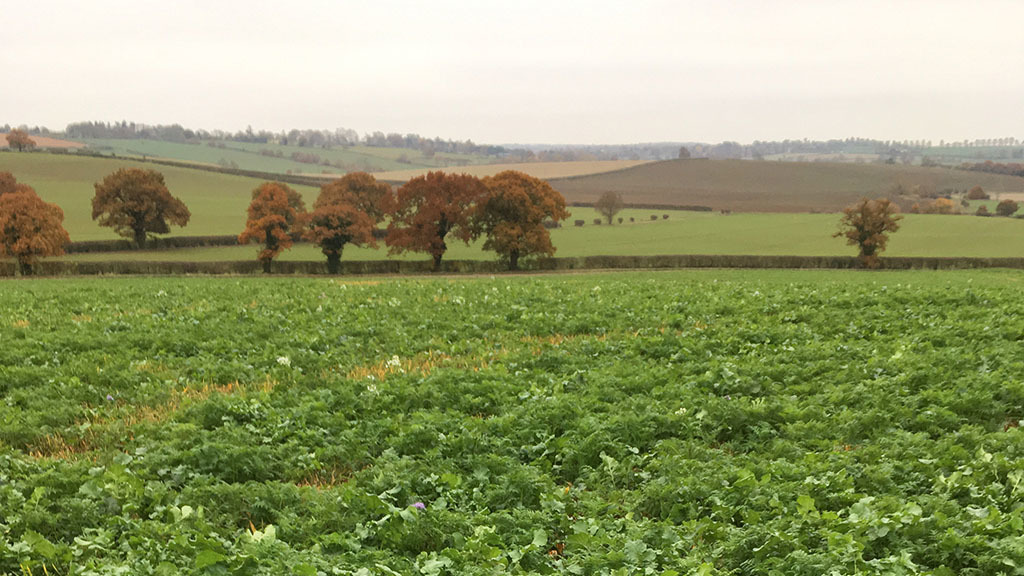 Assessing farming's carbon opportunity