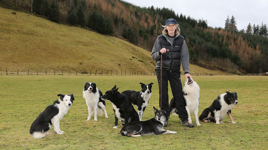 Backbone of Britain: Keeping traditional sheepdog skills alive