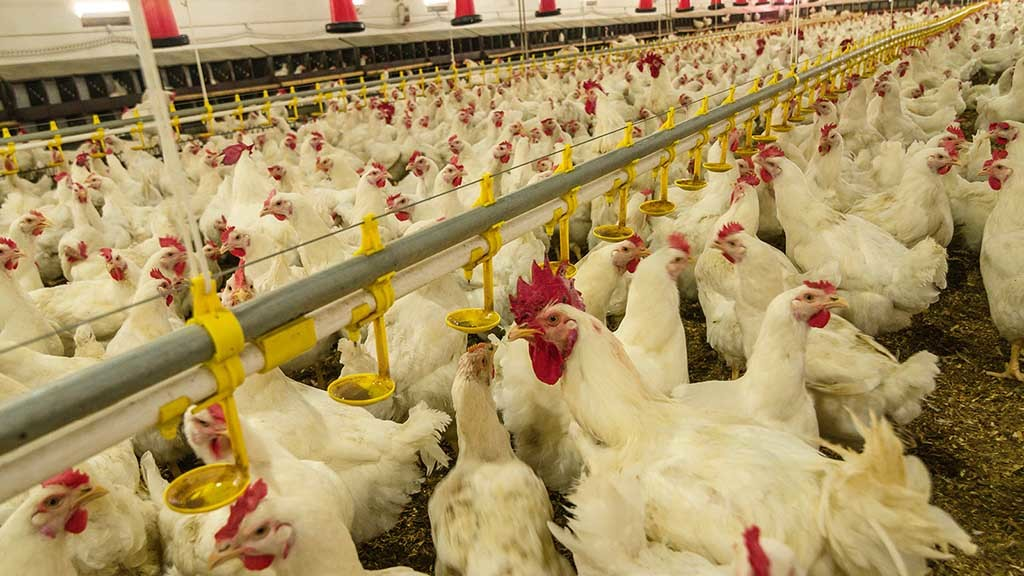 Global Ag View: US poultry giant Tyson Foods targets EU market