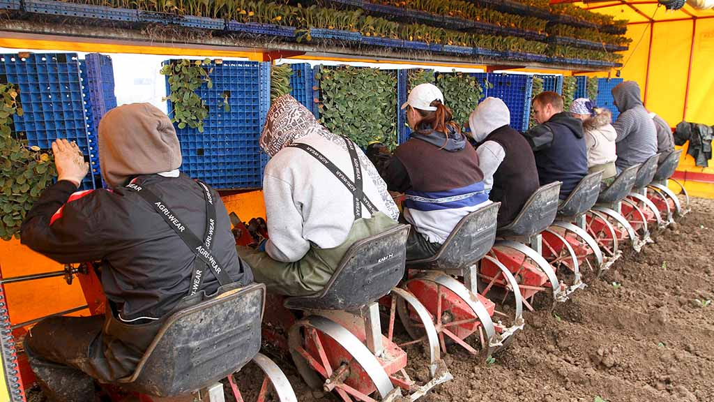 'Government is not listening' – NFU hits out at lack of action on seasonal labour