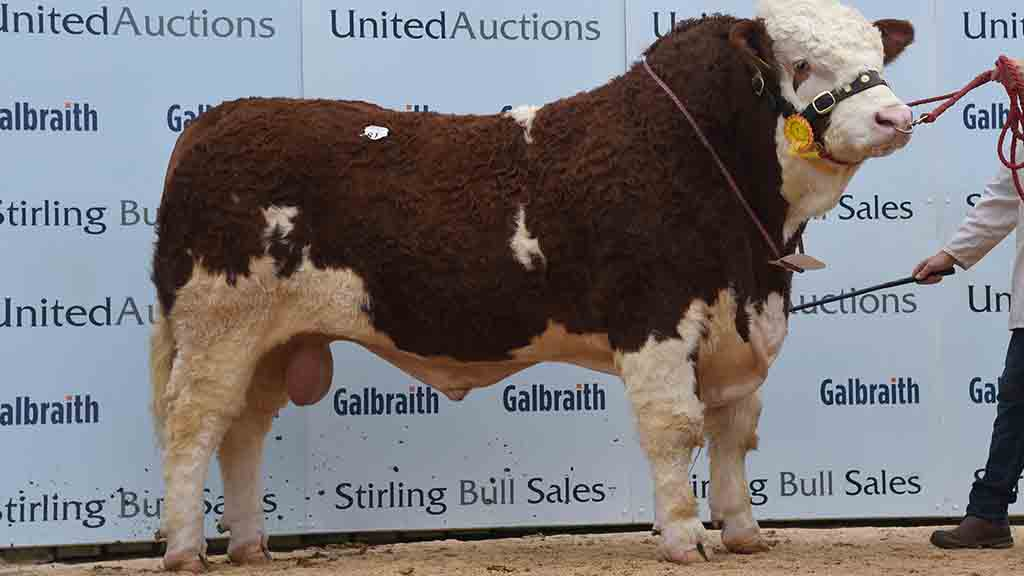 14,000gns Islavale Illusive from W.S. Stronach, Keith