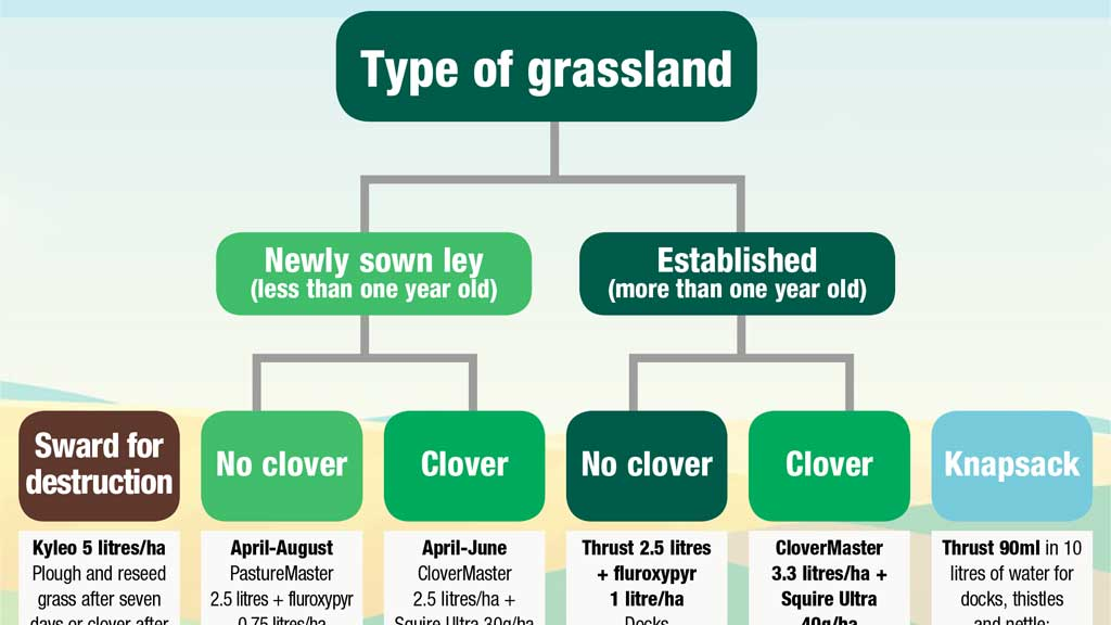 INFOGRAPHIC: Weed control decision tree