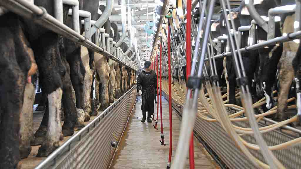 Barber's holds April milk price for third consecutive month despite production concerns