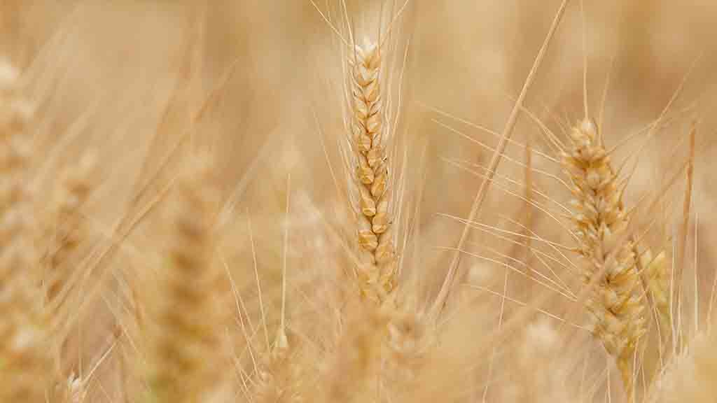 Cereals 2019: Changes vital for longer term profits