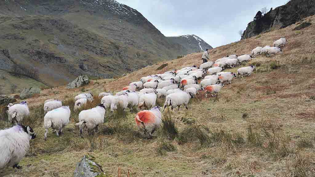 NFU Cymru urges farmers to respond to consultation on the future of the uplands
