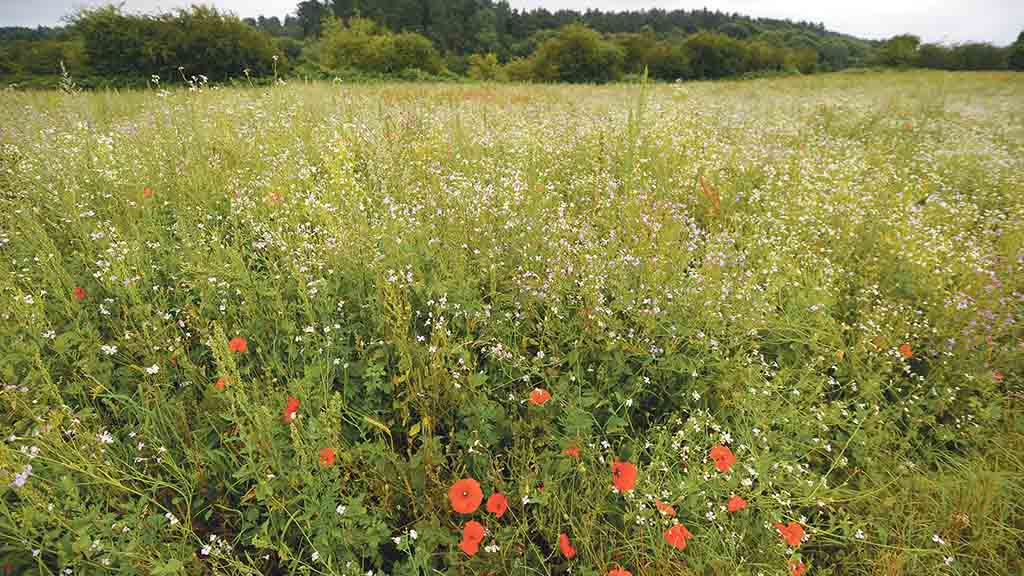 Farmers urged to apply for Countryside Stewardship