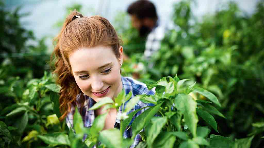 """""""Communication is agriculture's most powerful tool"""": Attracting new blood into agriculture"""