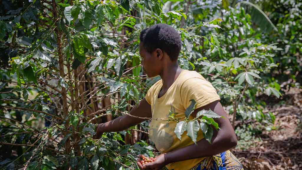 Woman power fuelling global agriculture