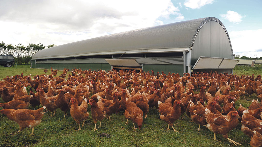 'Red mite estimated to cause £315m of financial damage to European poultry market'