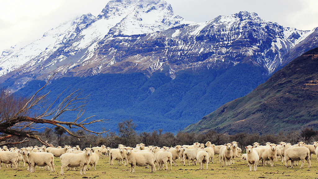New Zealand sheep and beef farms close to being carbon neutral