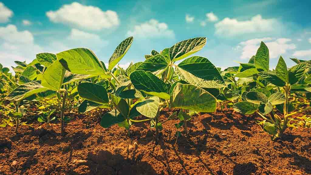 Global Ag View: US soybean area to rise despite tensions with China