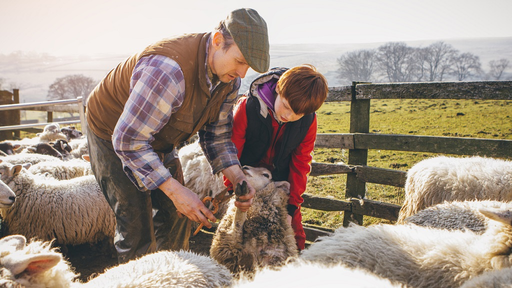 How UK farmers can get their hands on £30,000 worth of funding in 2019