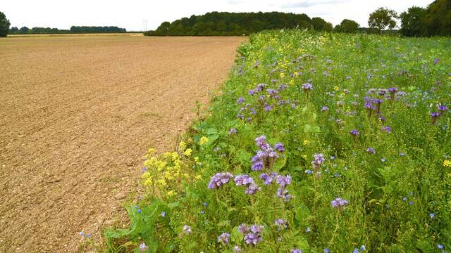 'British farmers should be viewing the environment as another crop'