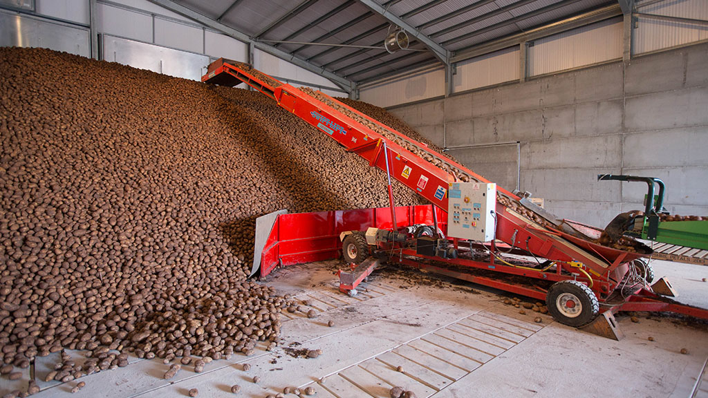 Potato stocks down 13 per cent on five-year average following tough 2018