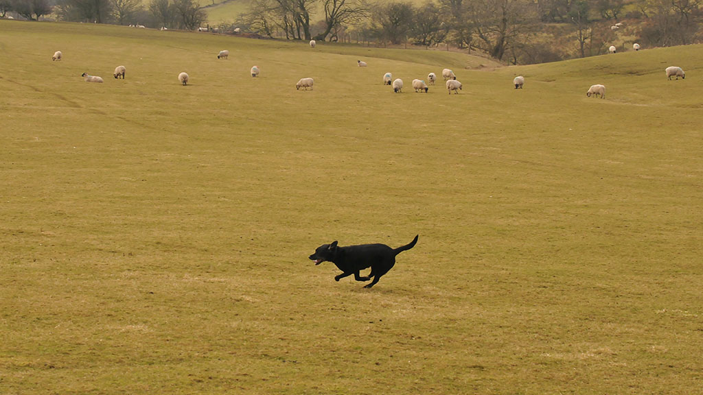The whole of Wales should have dedicated police for dog attacks on livestock, says FUW